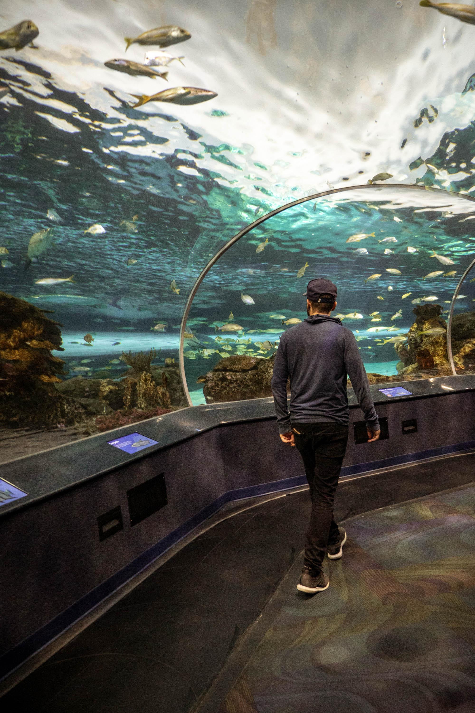 Toronto City Pass - Inside Ripley's Aquarium