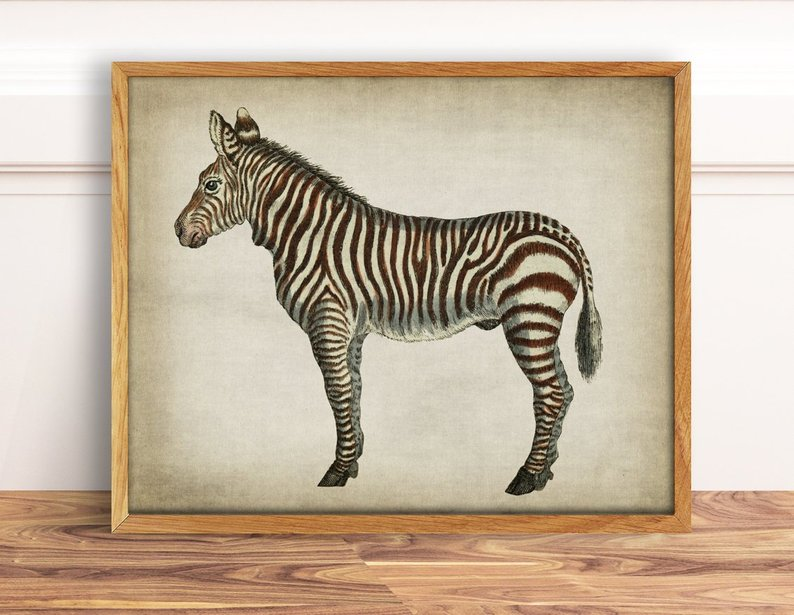 vintage zebra print