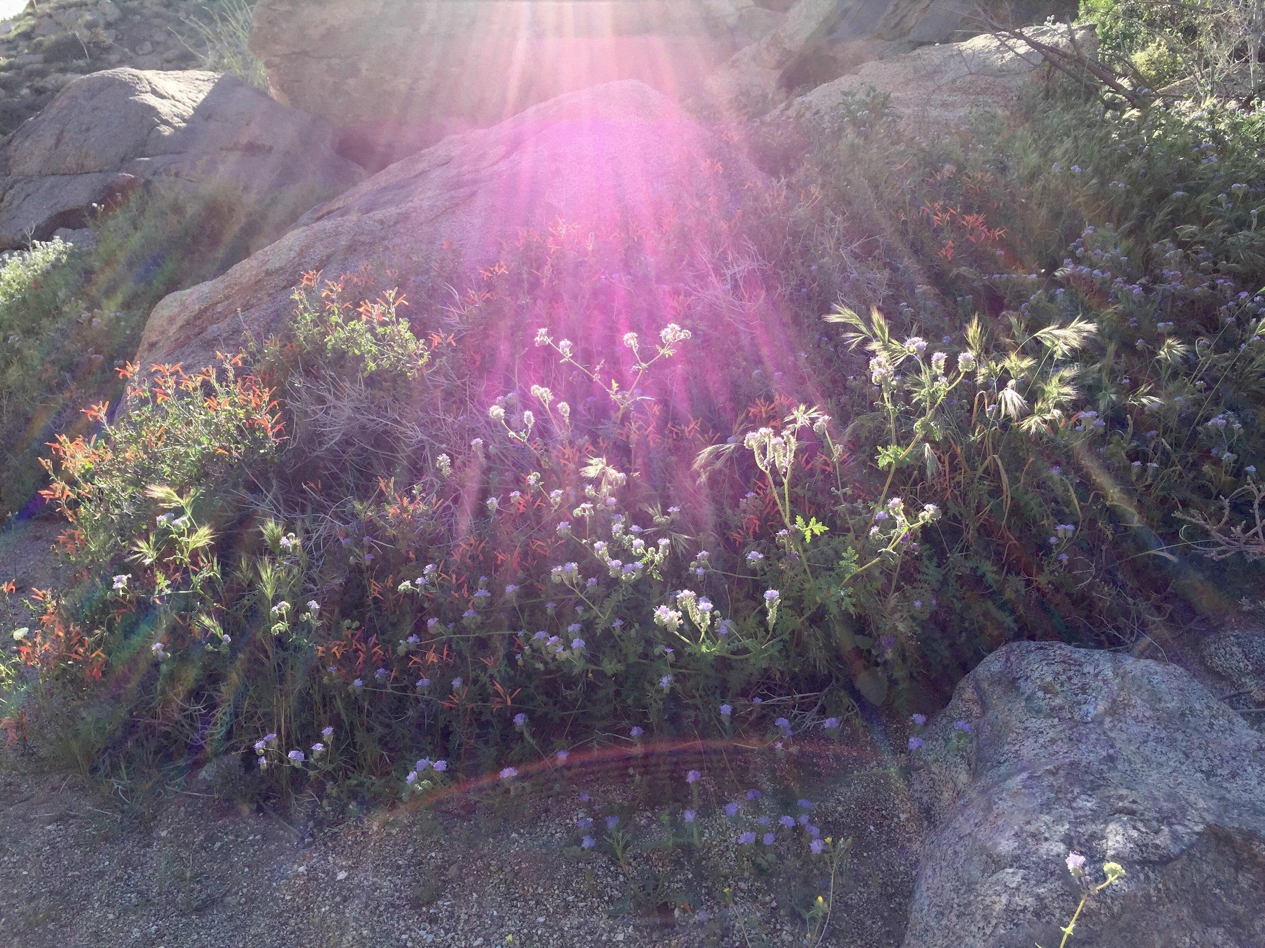 The sun shines in Anza Borrego State Park