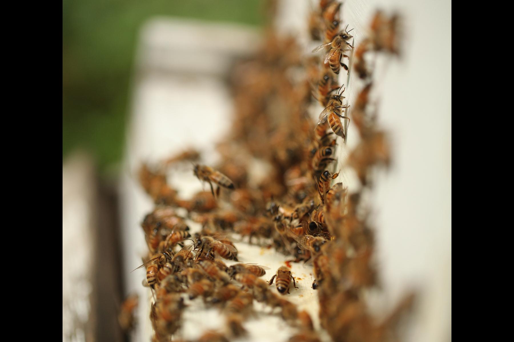 The-Pollinators__0015_HiveFront_IMG_9990.jpg