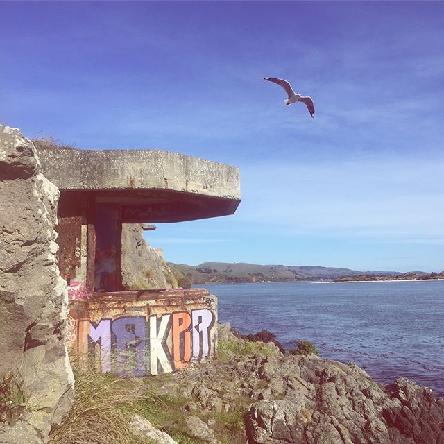 I'm drawn to abandoned ruins so when I spotted these gems from across the harbour while out exploring I had to get over to them, managed to pick a stunner of a day too! Winning!! The Gun emplacements and network of tunnels date back to the 1890's when fear arose that the Russian Empire might invade, lucky for us they didn't! Now covered in graffiti a playground for wanders like myself to explore, I'm sure there have been many rad parties had here on the cliffs 🤘🏼 #neverstopexploring #exploremore #abandonedplaces #gunemplacement #dunedin #harringtonpoint #history #nztravel #girlswhoadventure #soloadventure #outsideisfree #outsidelife #adventurebound