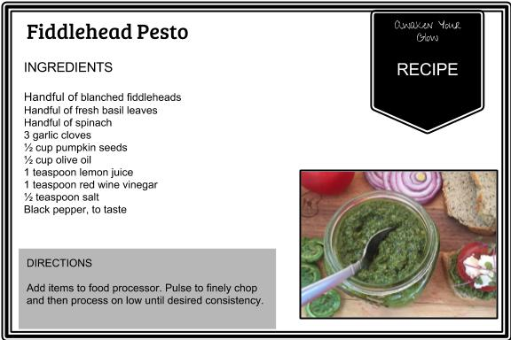 fiddlehead pesto recipe