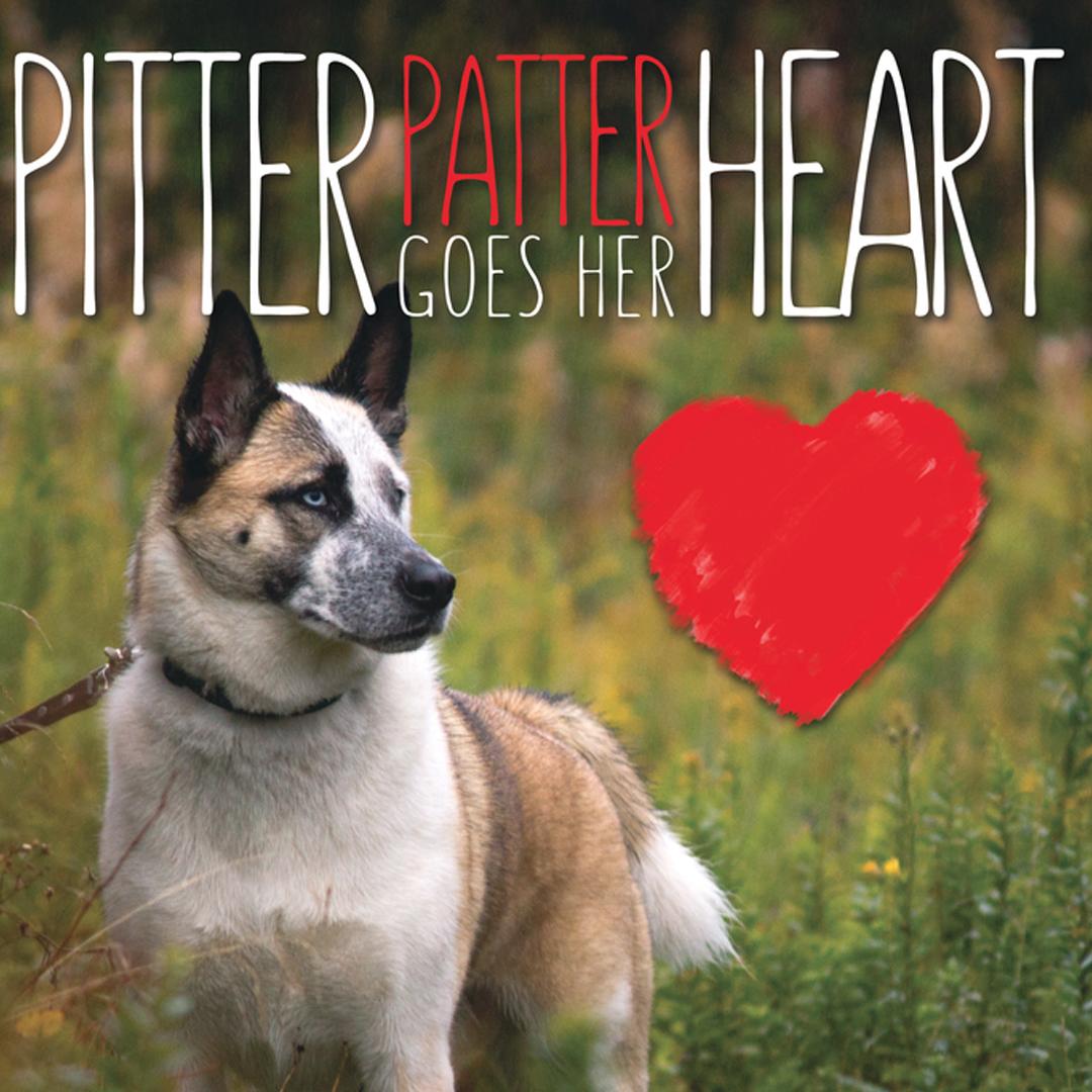 Pitter Patter.jpg