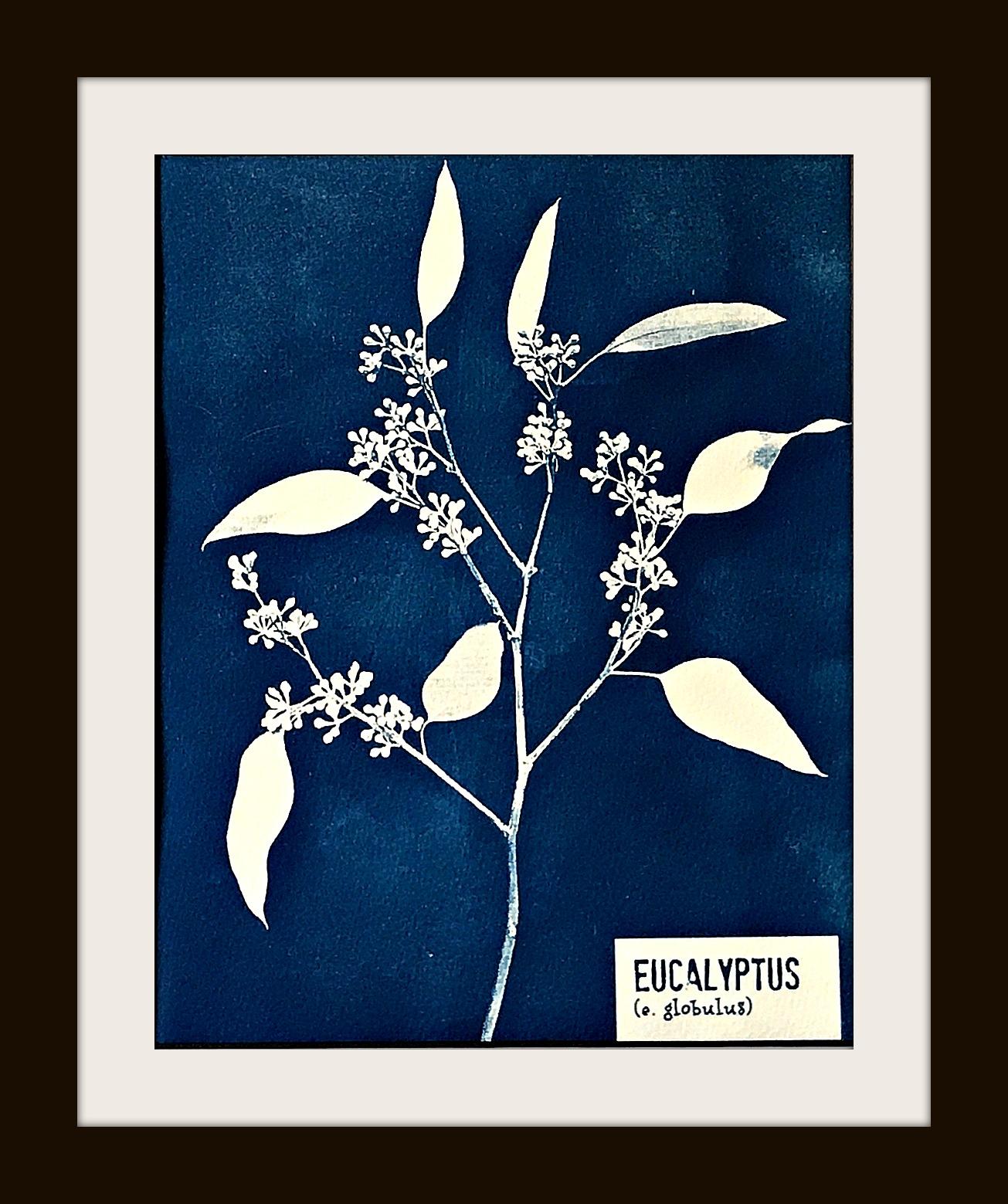 eucalyptuswebFinal.jpg