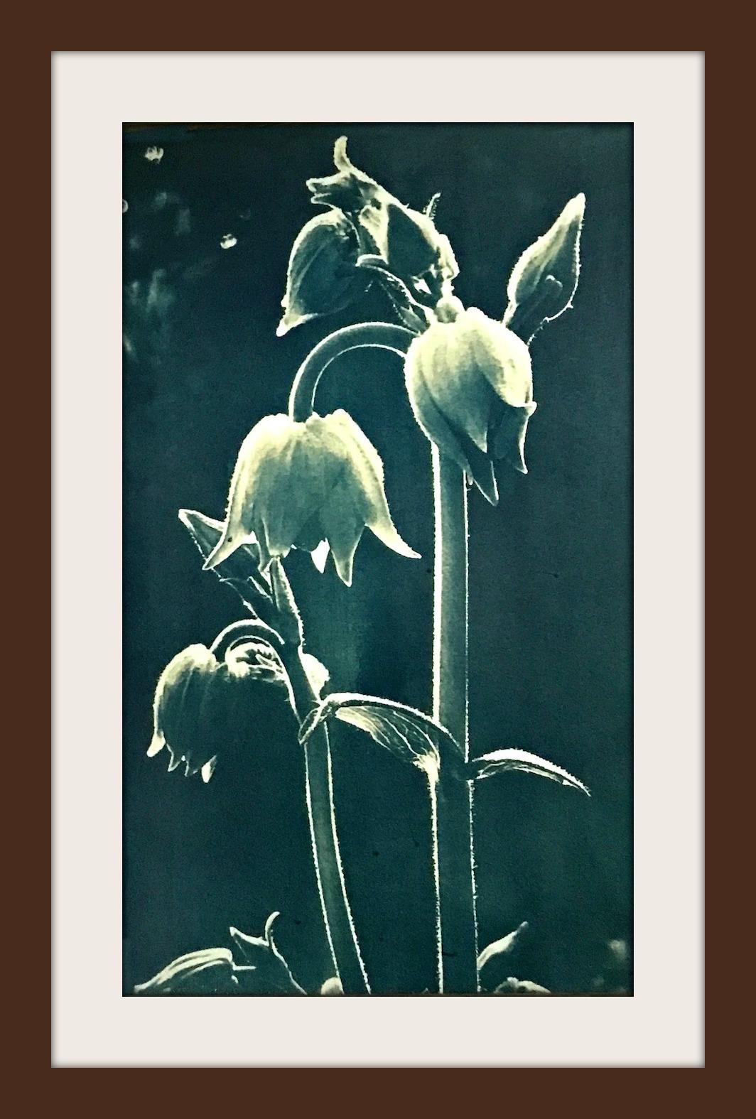 flowerbinbleached.jpg