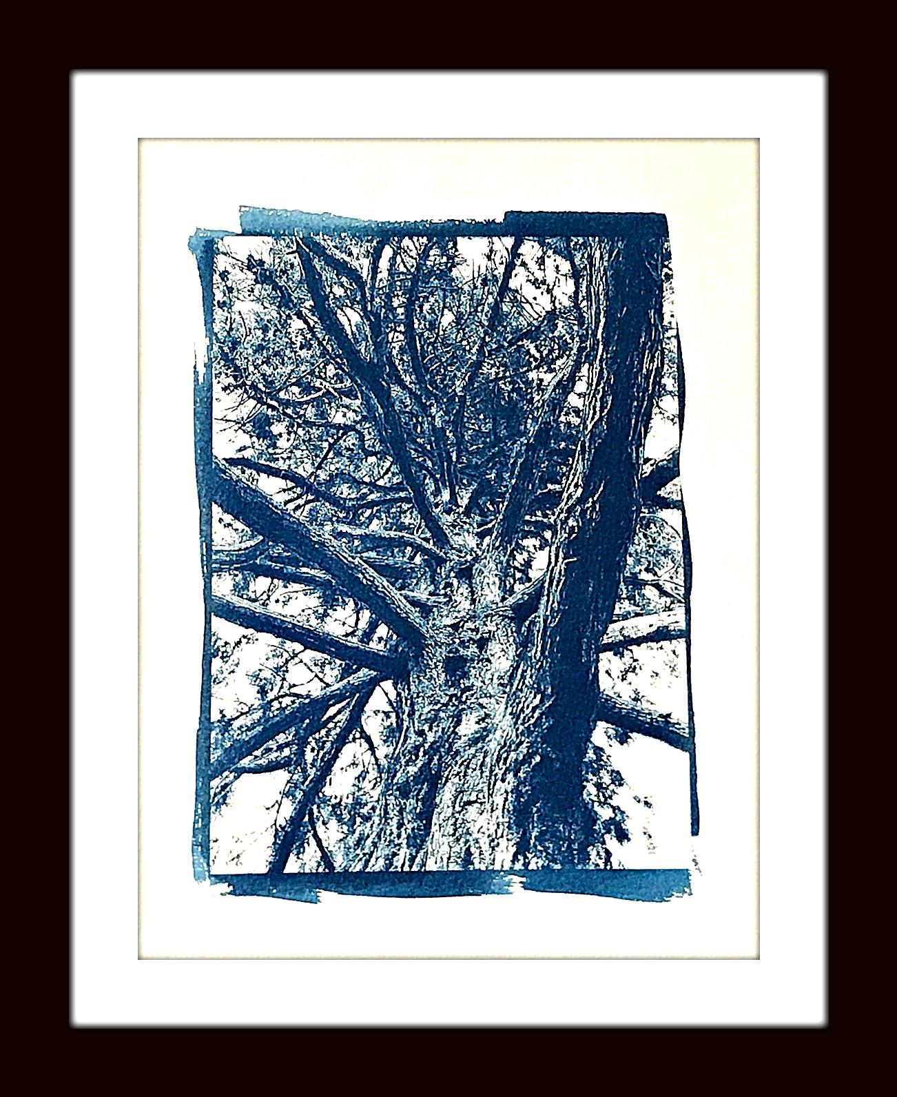 treeupshotwebFinal.jpg