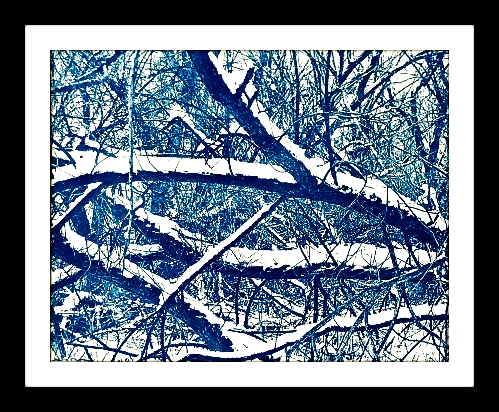 snowybrancheson47thWEB.jpg