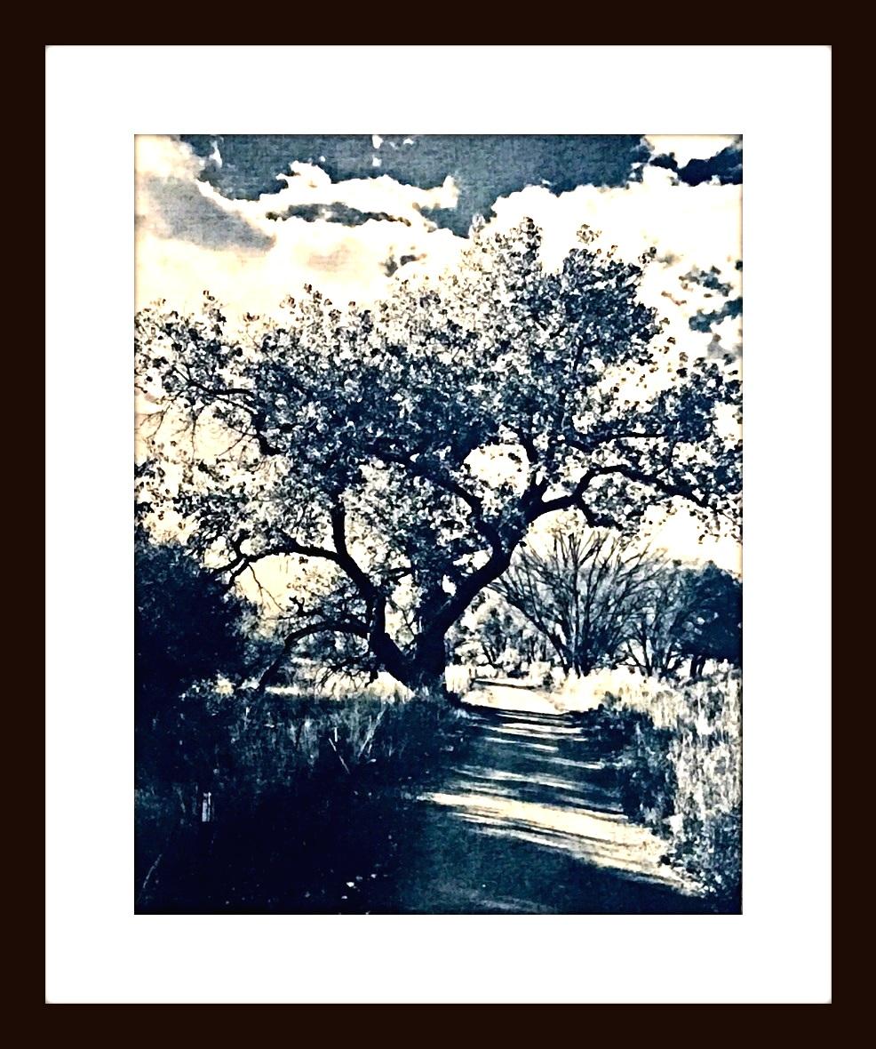 cottonwoodTrail1FRAMED.jpg