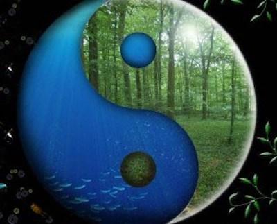 Yin Yoga Training.jpg