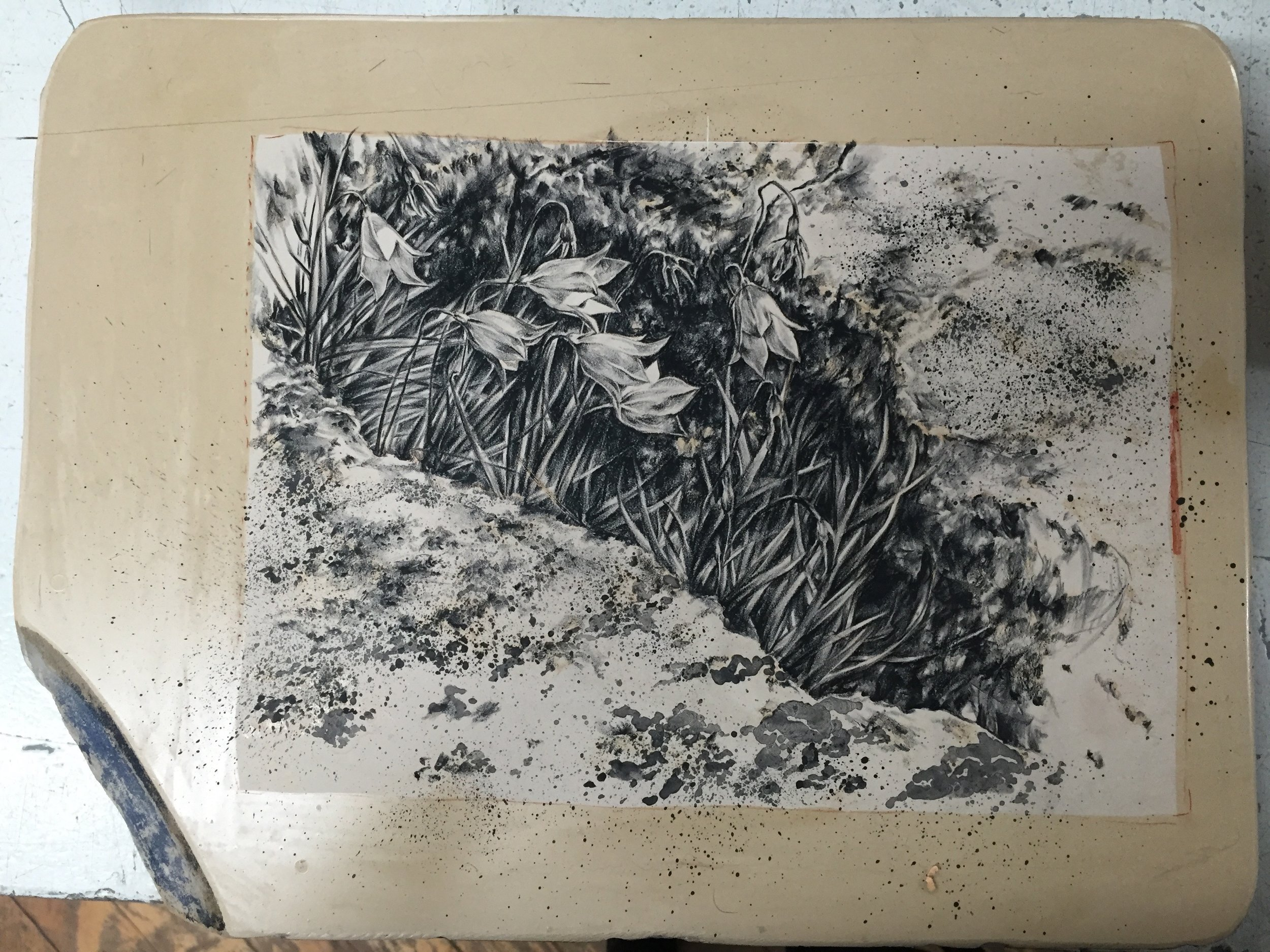 completed drawing on stone, pre-etching
