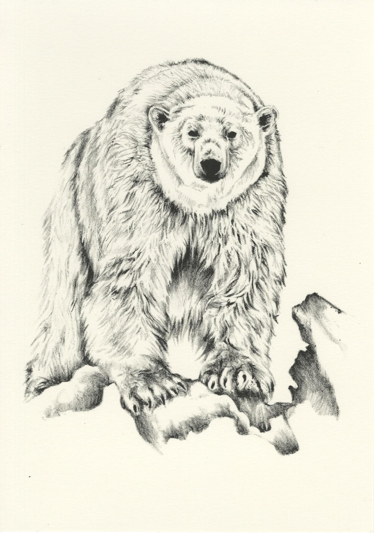 Polar Bear, 2018