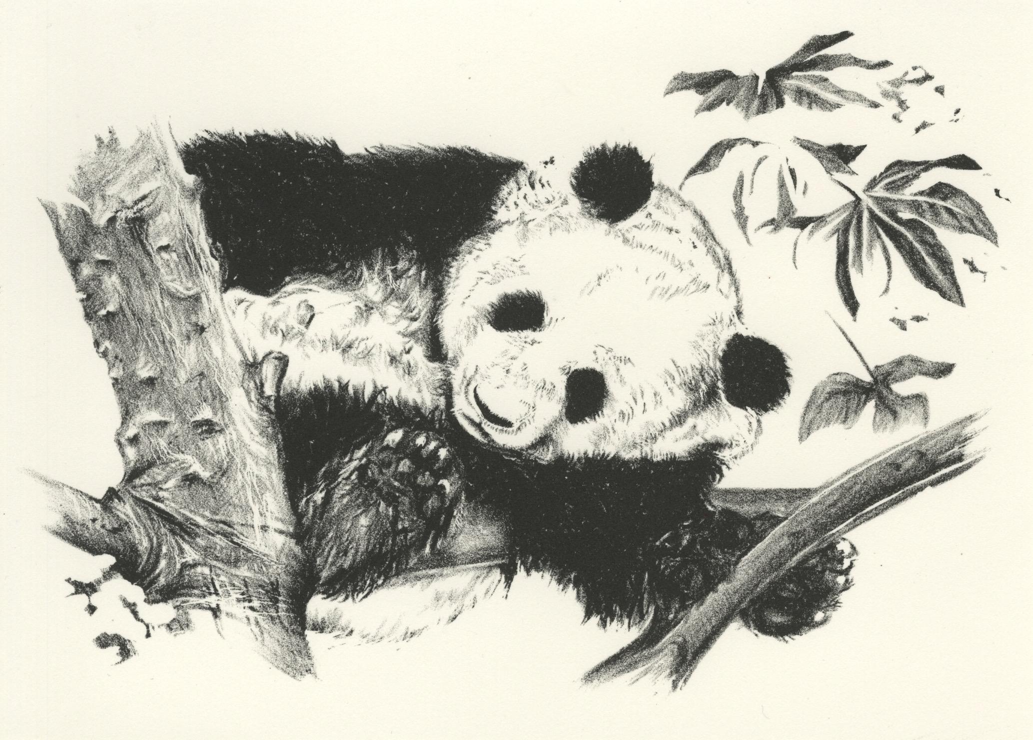 Panda, 2018