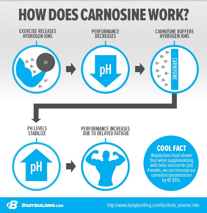 how-does-carnosine-work-infographic-v2.jpg