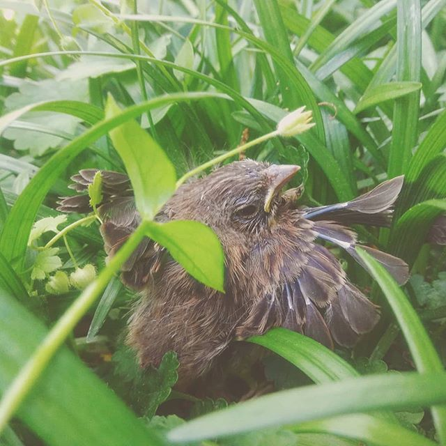 little spring 🐣 will hopefully be able to fly next time she jumps from the nest