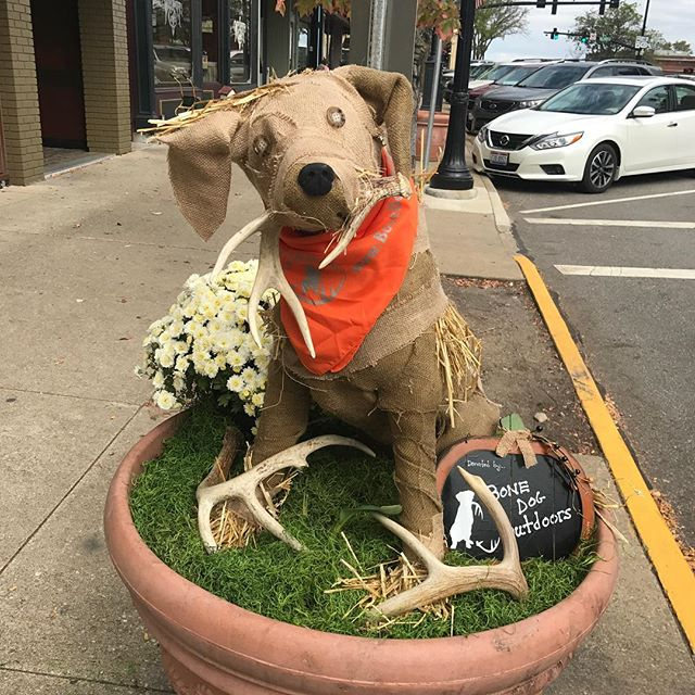 We are all about community. Our home town decorates these pots each fall and I have always said I wanted to sponsor one.  I think the scarecrow shed dog turned out cute! #lovefall #lovefamily #lovecommunity #bonedog #sheddog