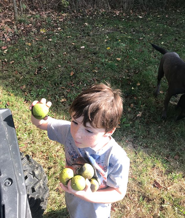 Today brought back memories from when I was DJ's age and we helped my grandpa pick up walnuts. #littlethings #sunday #grandparents #iftheycouldseeusnow #betheexample