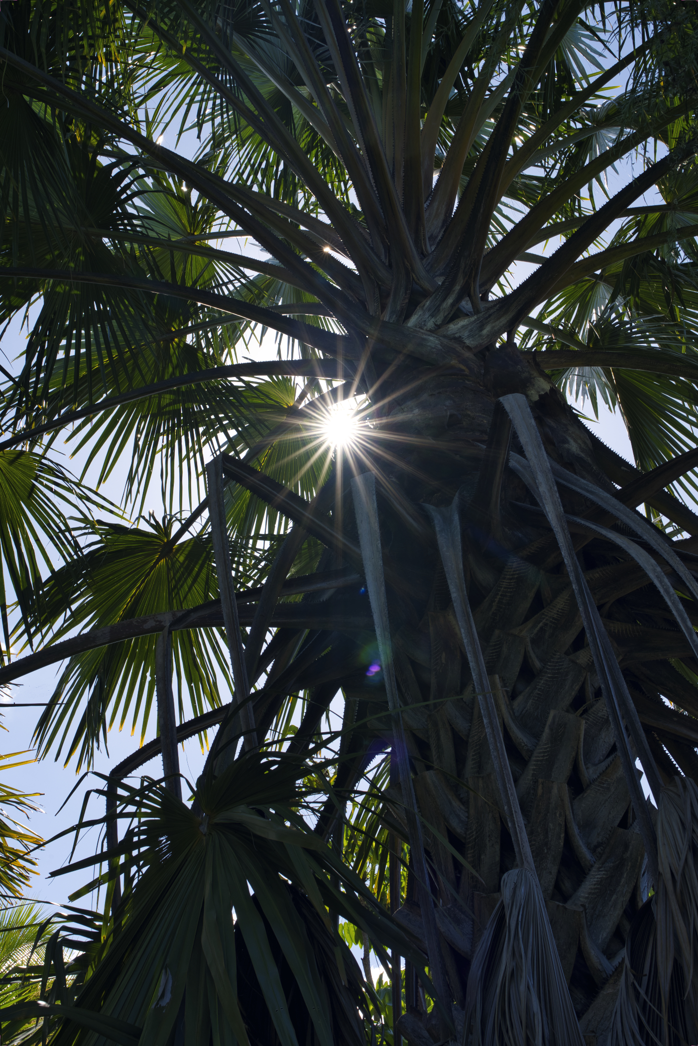 There is an abundance of palms that offer a little shade during the day.