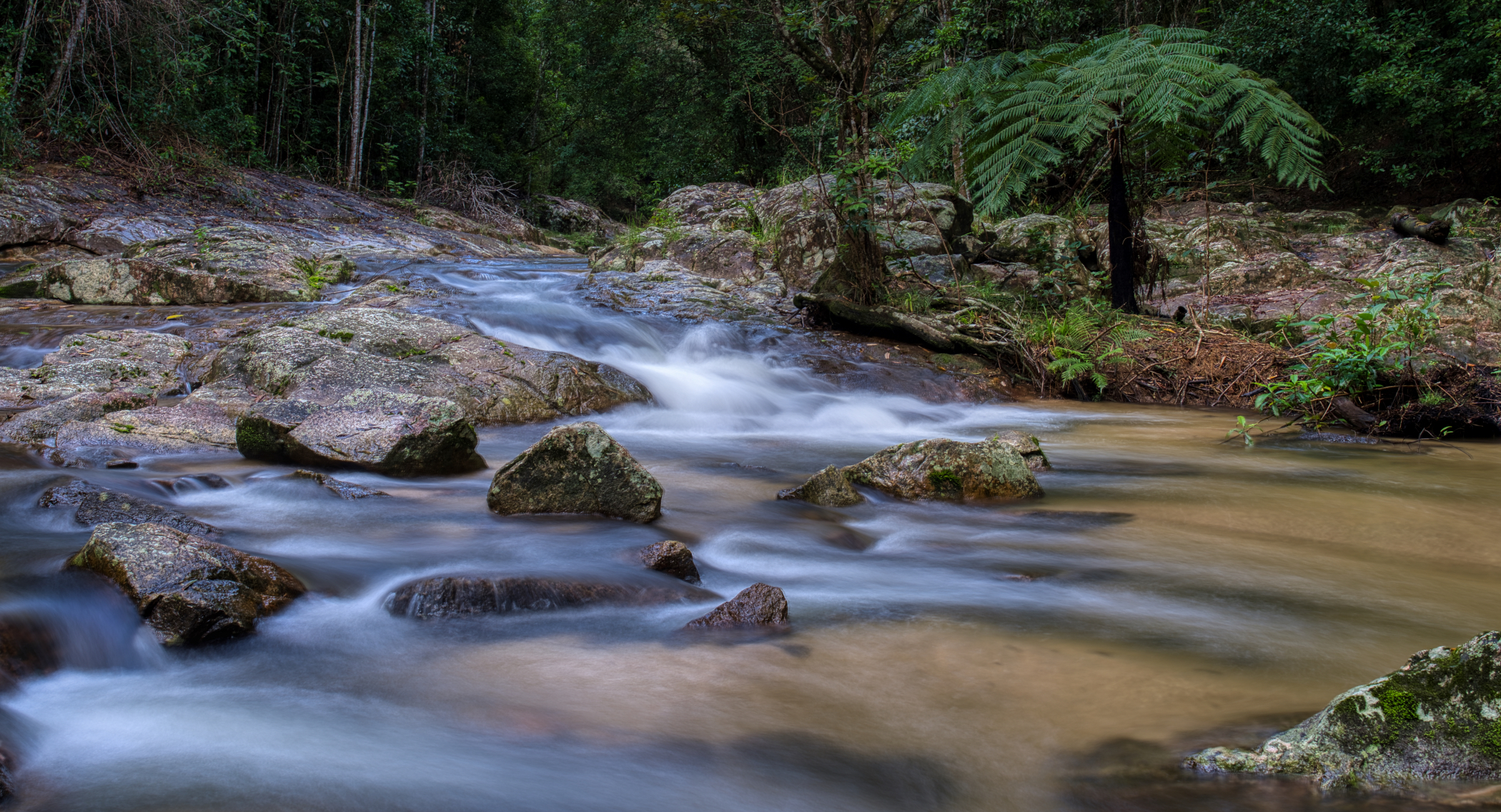 Kauri Creek just down from the carpark.