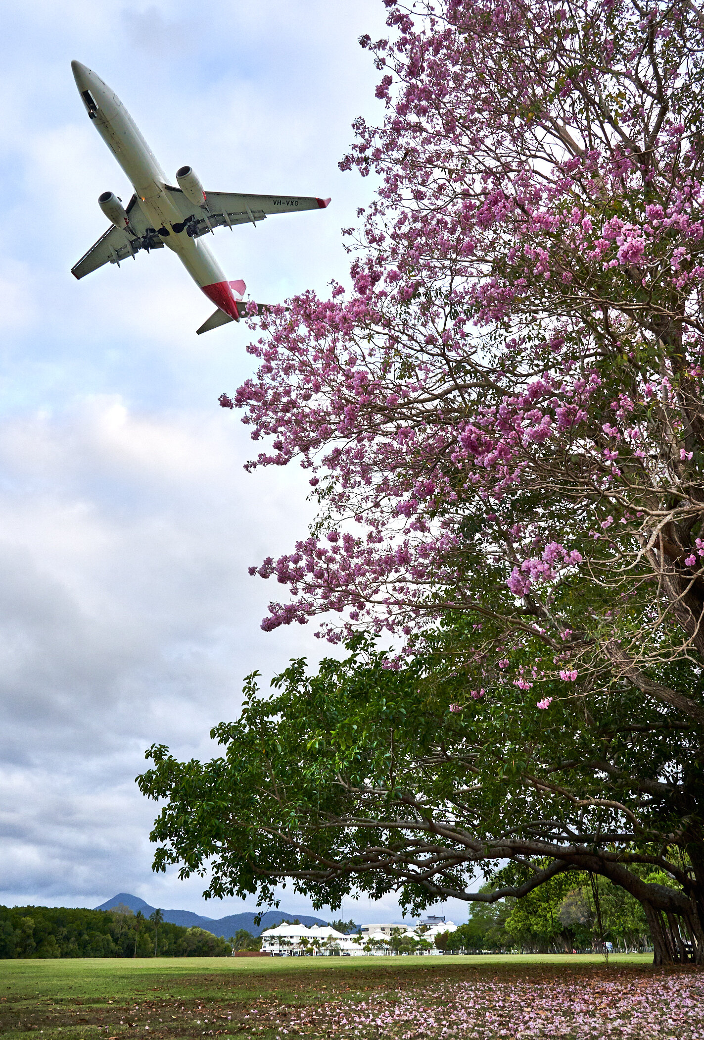 Qantas flight passing over parkland at the end of the Esplanade. October 2019