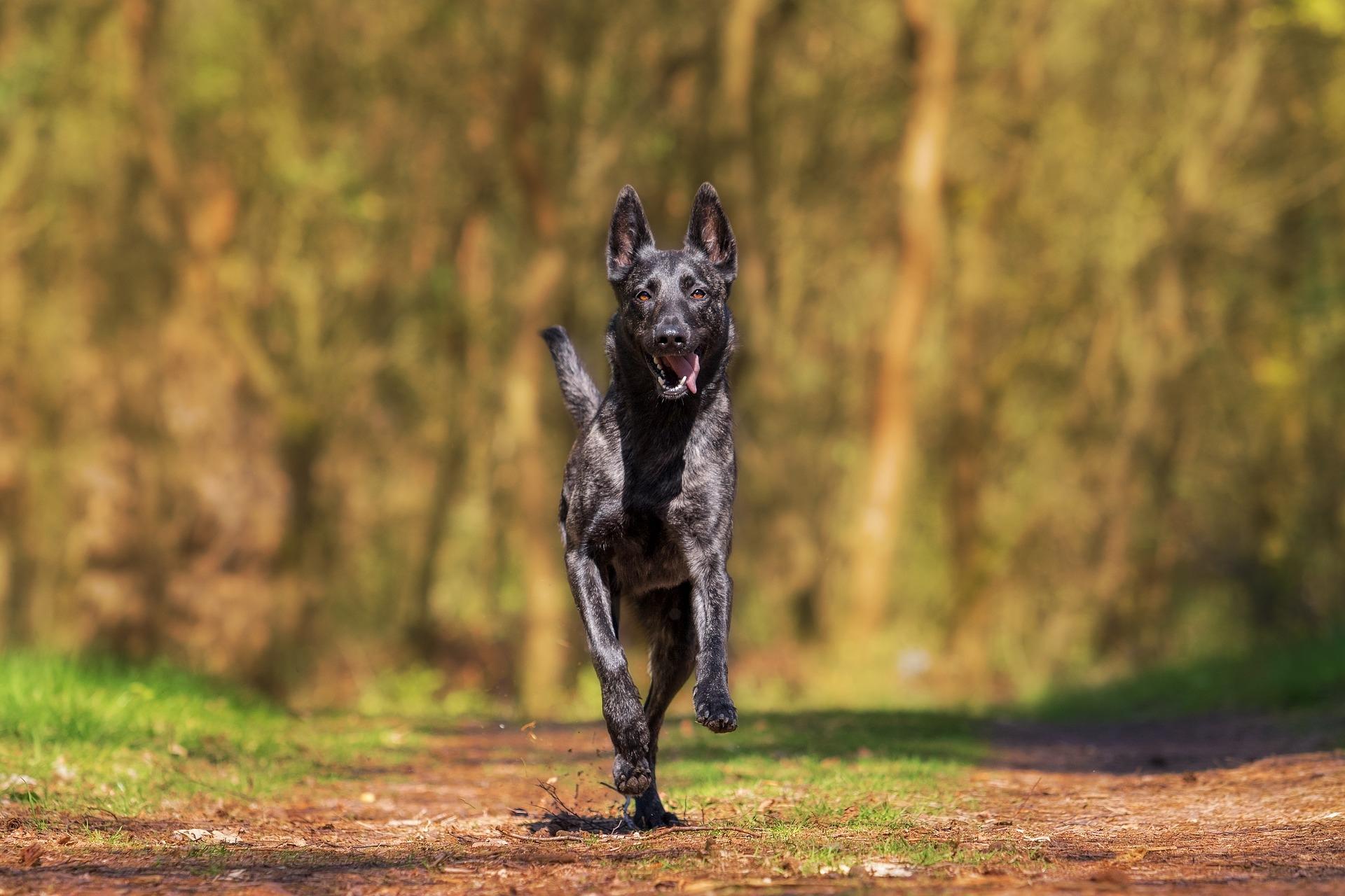 running_dog_coat_defense.jpg