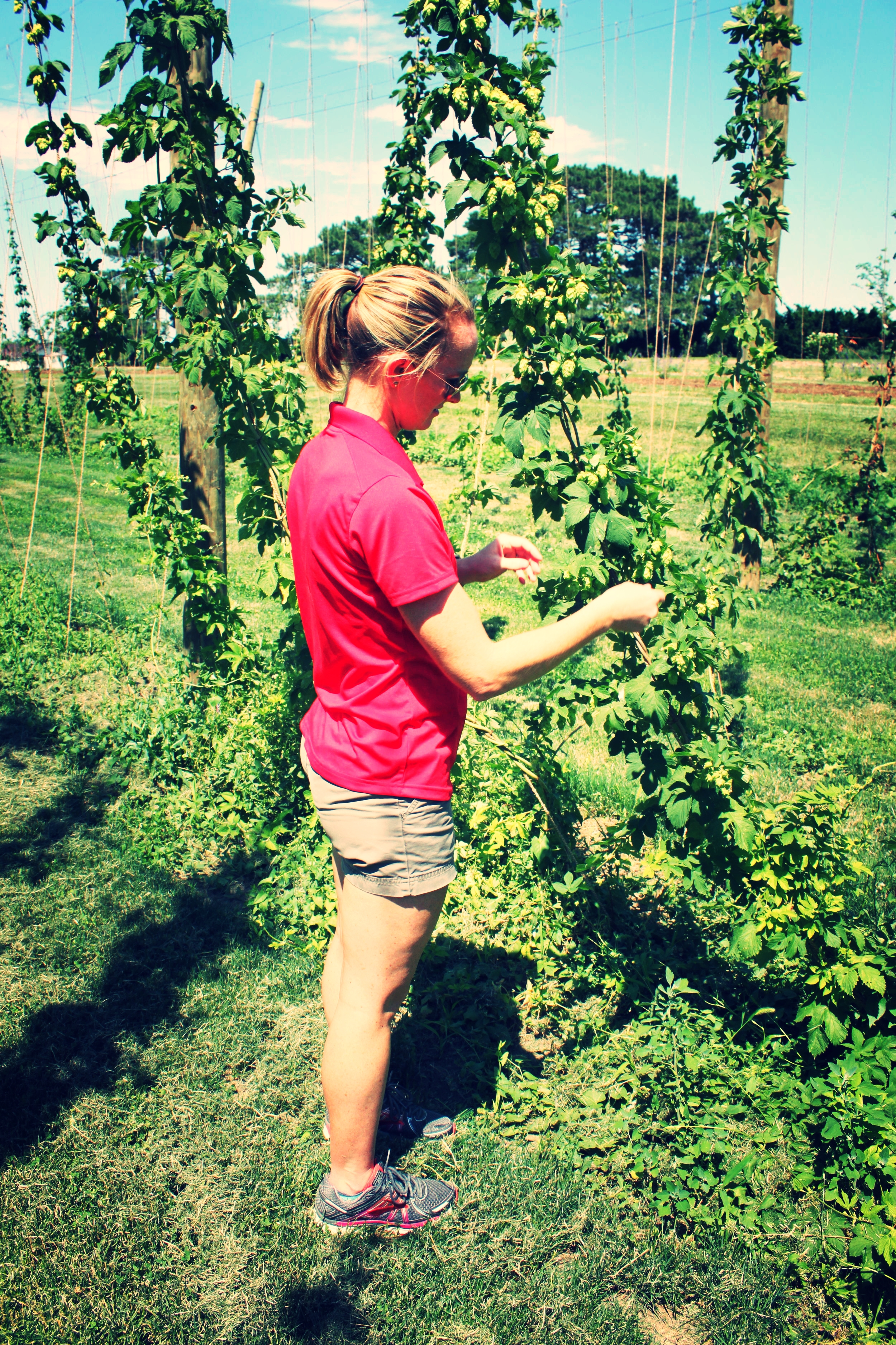 Photo from Katie checking hop plants