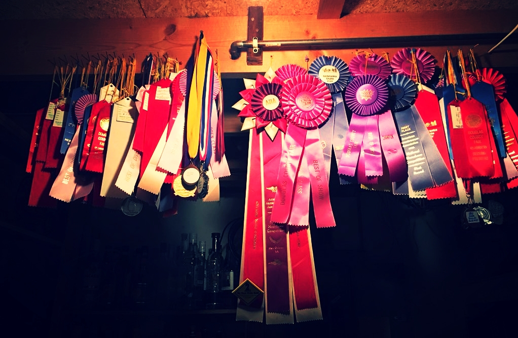 Competition ribbons won - Photo from John Fahrer