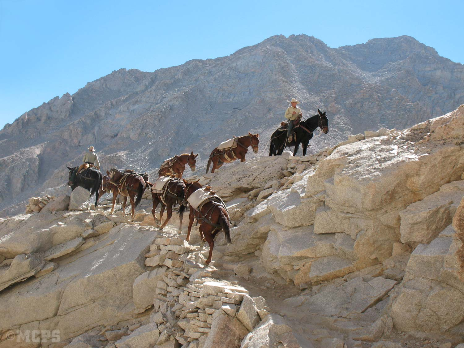 Our mules on the trail