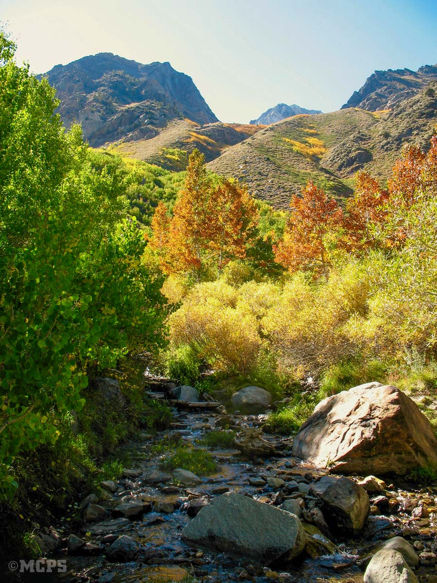 California fall colors near Horsetail Falls in McGee Canyon are tops in Mono County and the Eastern Sierra