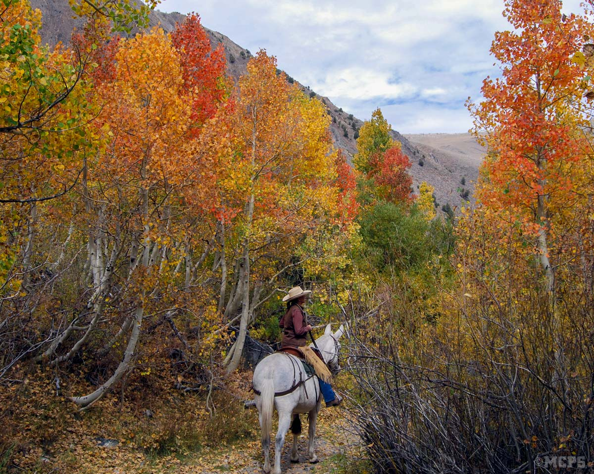 Fall color Mammoth trailrides: Spectacular colors in McGee are best seen by muleback!