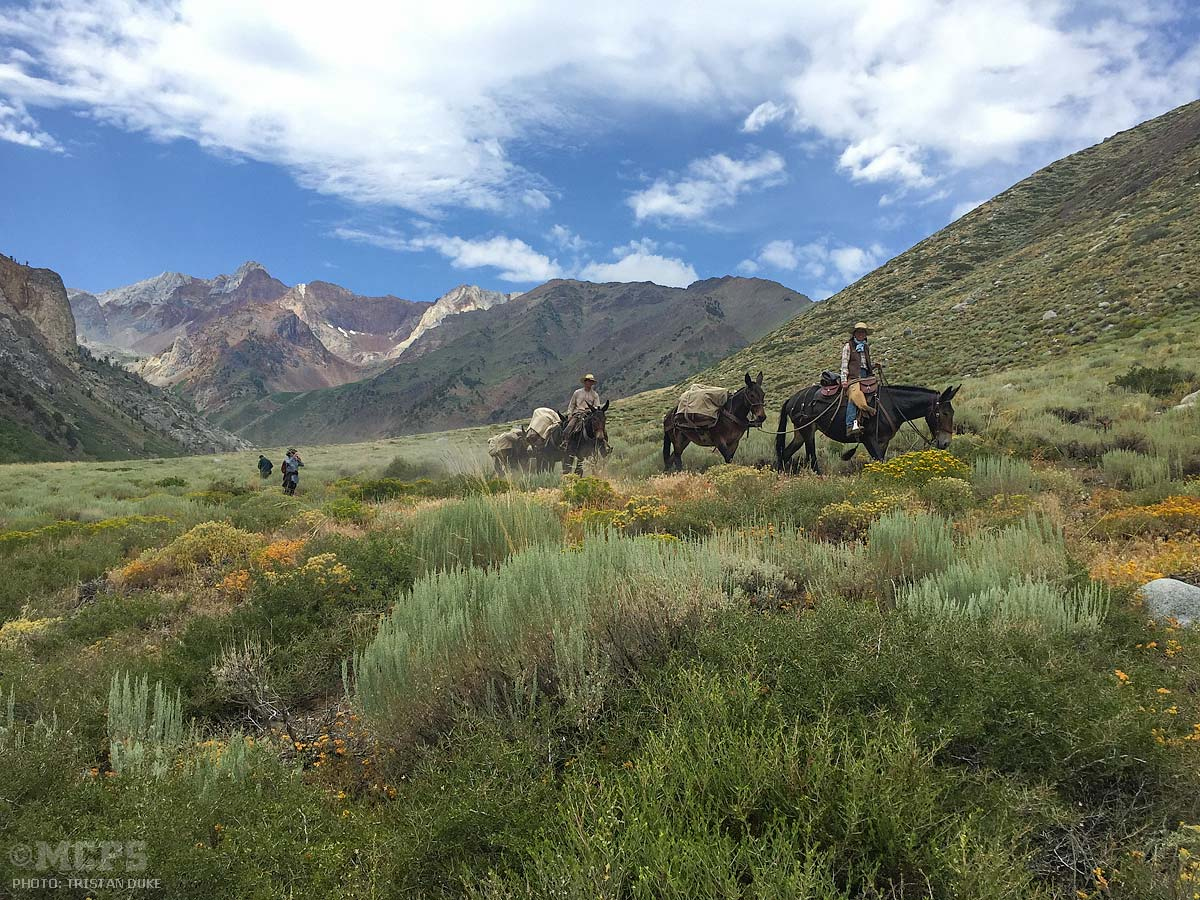Riding home: McGee Canyon blossoms for lucky Mammoth mule riders. One of the top 10 things to do on the Eastside!
