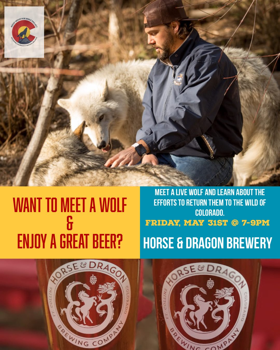 Wolves of the Rockies along with The Rocky Mountain Wolf Project and Wolf Action Fund with be at the Horse and Dragon Brewery Friday May 31st from 7-9 pm. We are excited to share a special brew made specifically for this occasion with you!  So come on down to Fort Collins, enjoy a beer, learn about wolves, the efforts to bring them back to Colorado and help us raise a little money to make it all happen.  I'm excited to meet an speak with you all —   See you then!  Kim