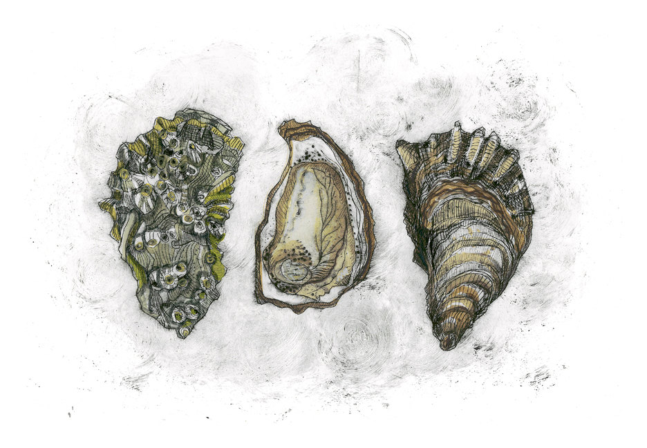 Oysters, 12×18 $95