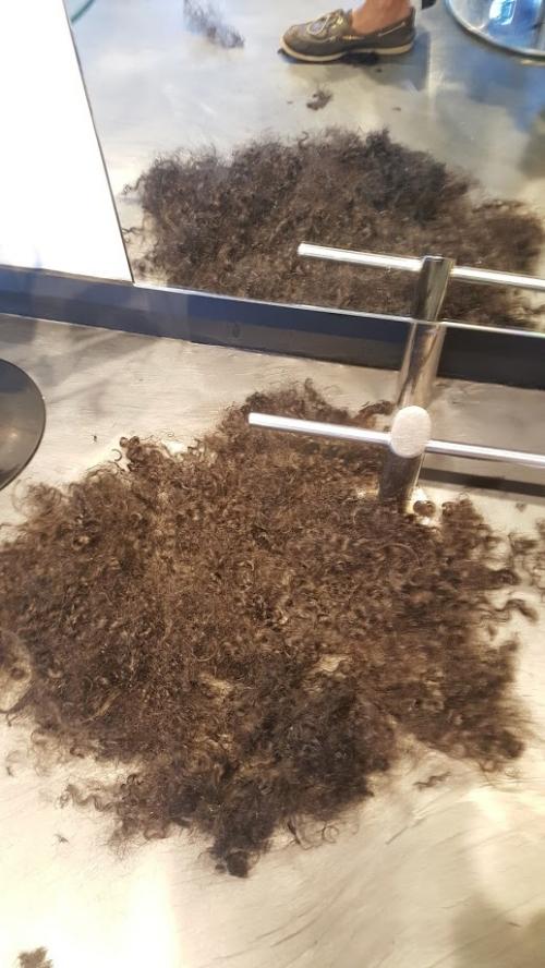 Shaved labradoodle.jpg