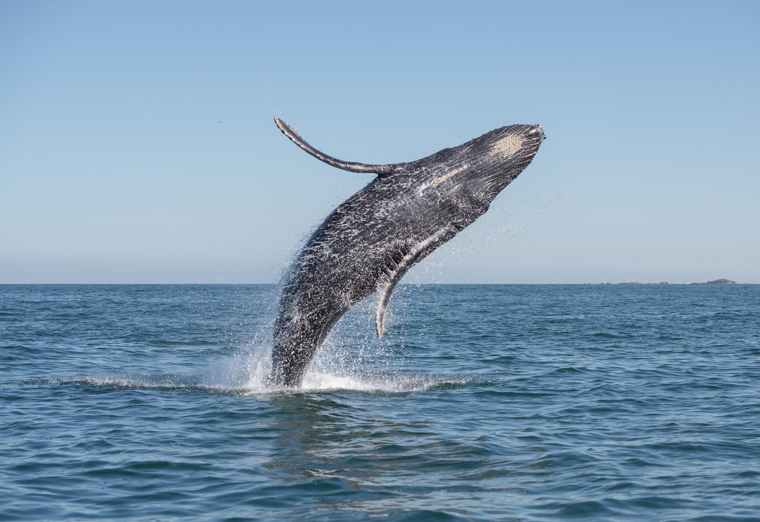 AniVillas_SriLanka_WhaleWatching