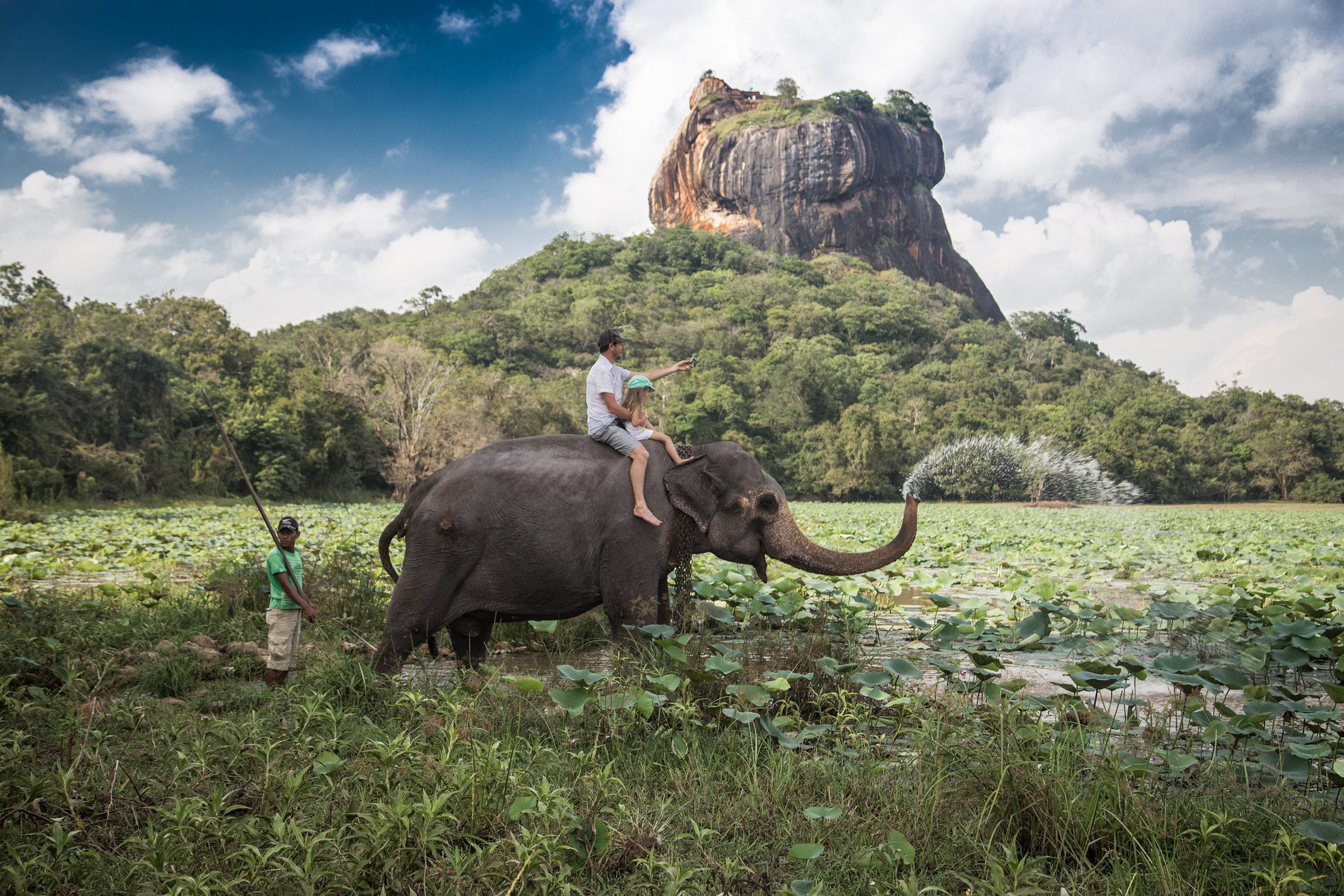 AniVillas_SriLanka_Elephants
