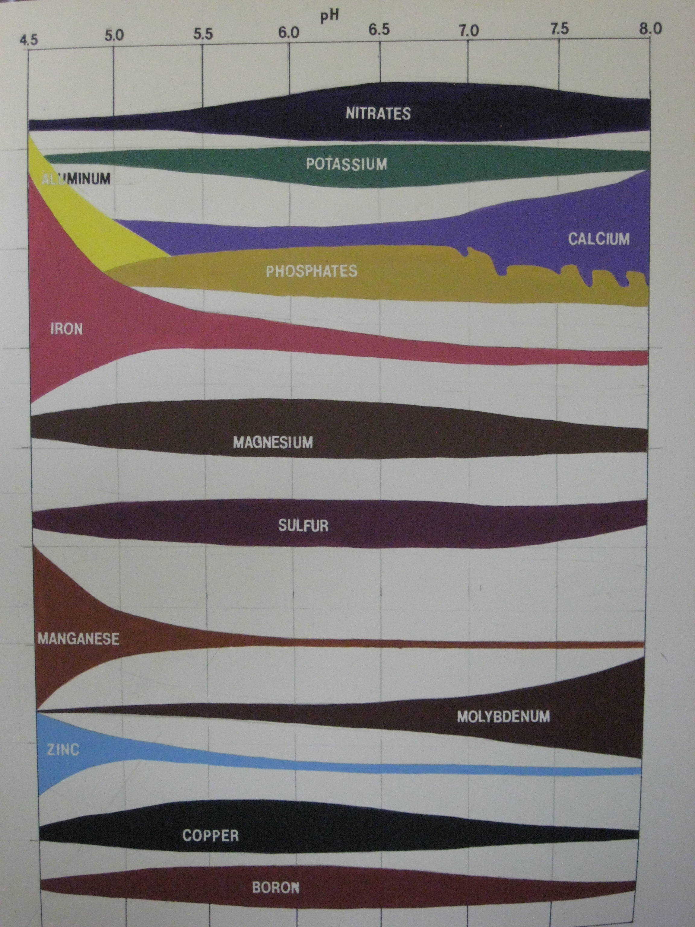 "A soil science instructor, during one of her lectures, expressed the desire to have a poster-sized version of the above pH ( potenz Hydrogen , a phrase meaning the ""power of hydrogen"" or the ""potential of hydrogen"") scale. The above image is painted onto a 32"" x 40"" sheet of mat board. The scale is on the wall of the classroom as a teaching tool to show students how soil pH affects the   nutrient availability and form  , which is vital to plants."
