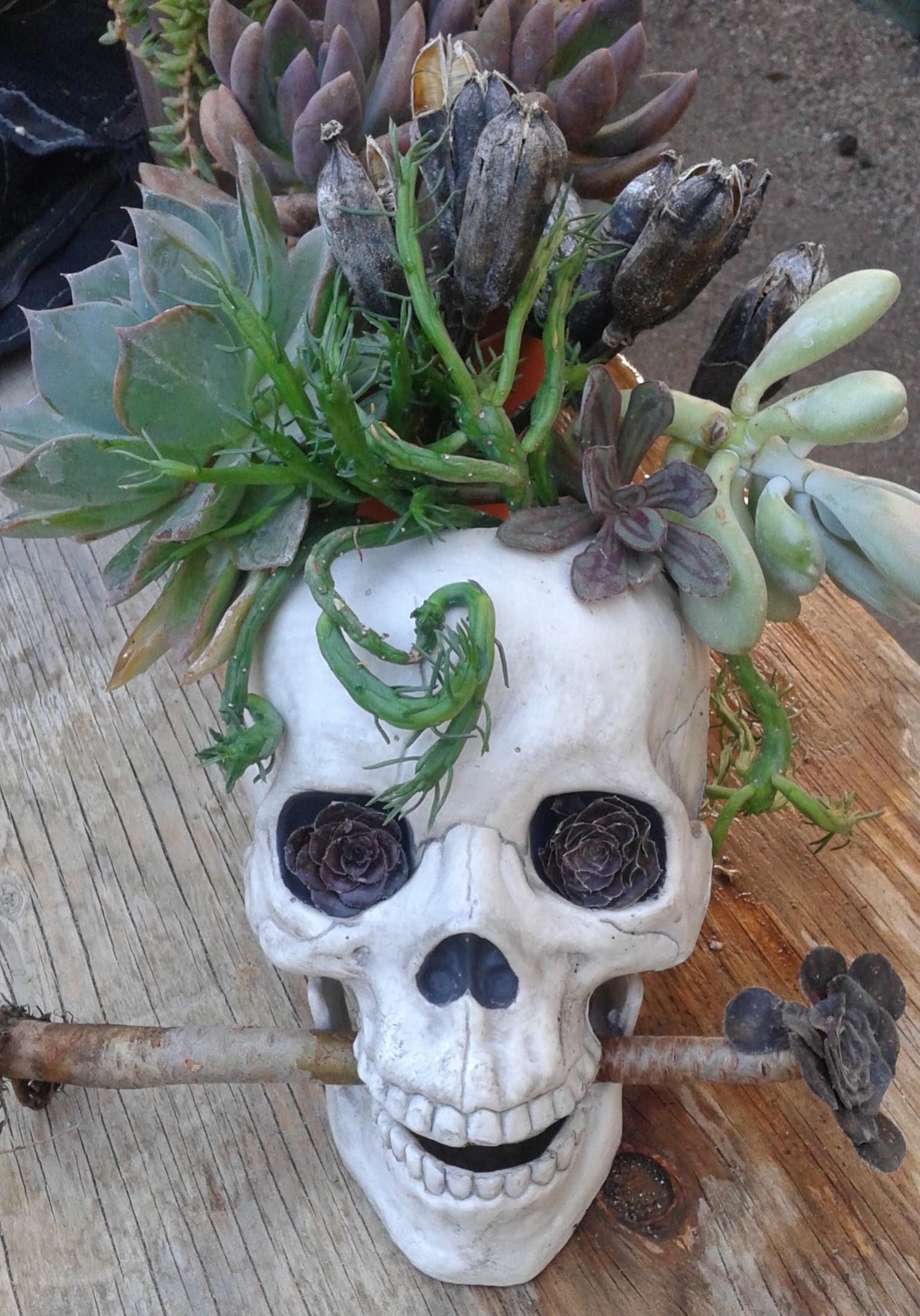 Succulent Planted Plastic Skull