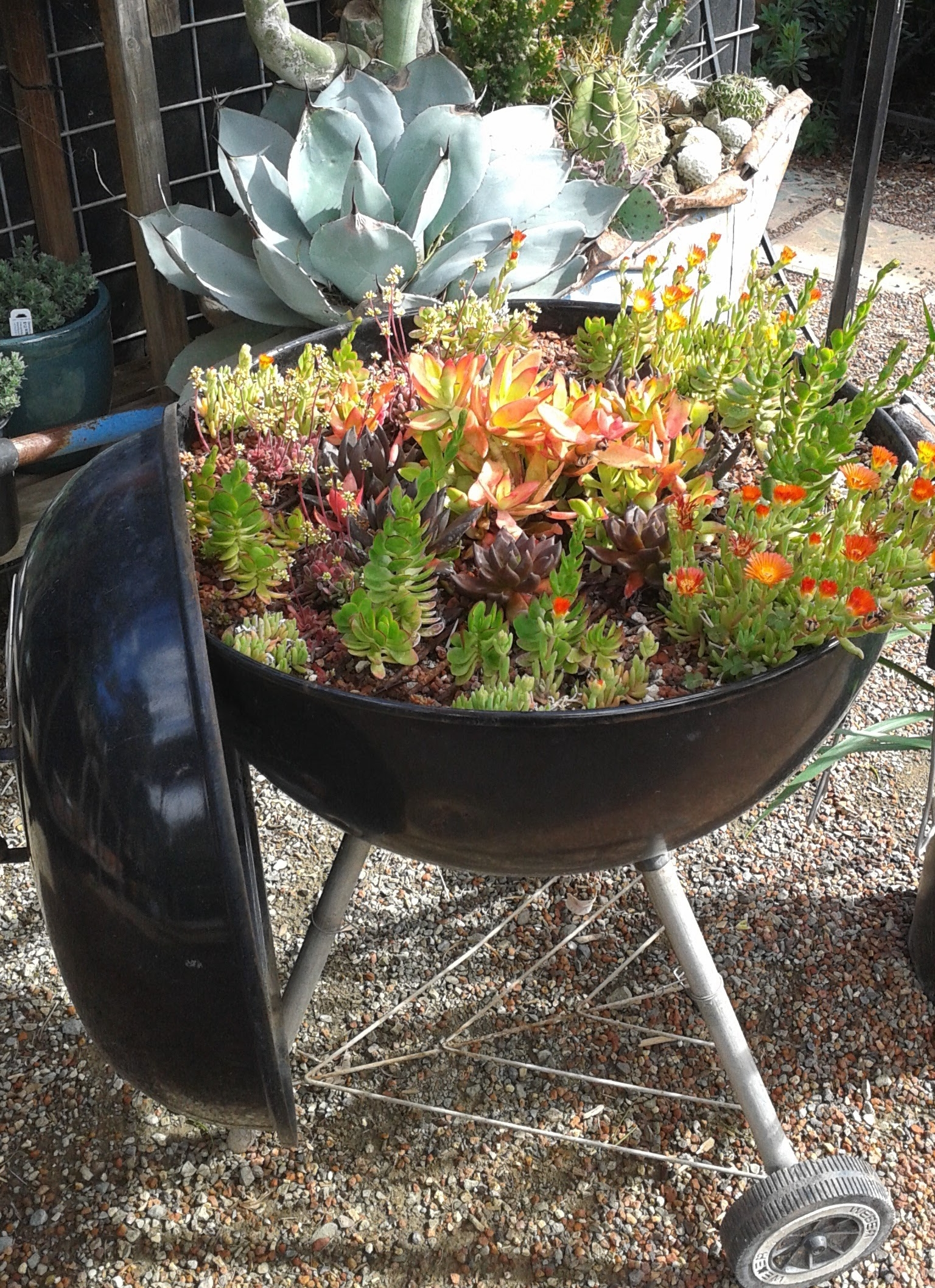 Gary's succulent planted Weber Grill a year later.jpg