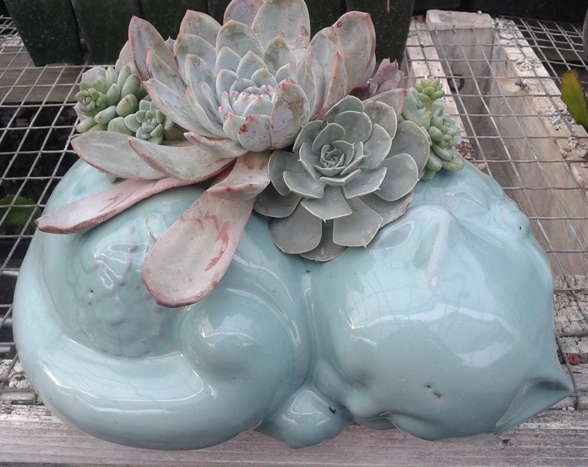 Succulent Planted Ceramic Feline