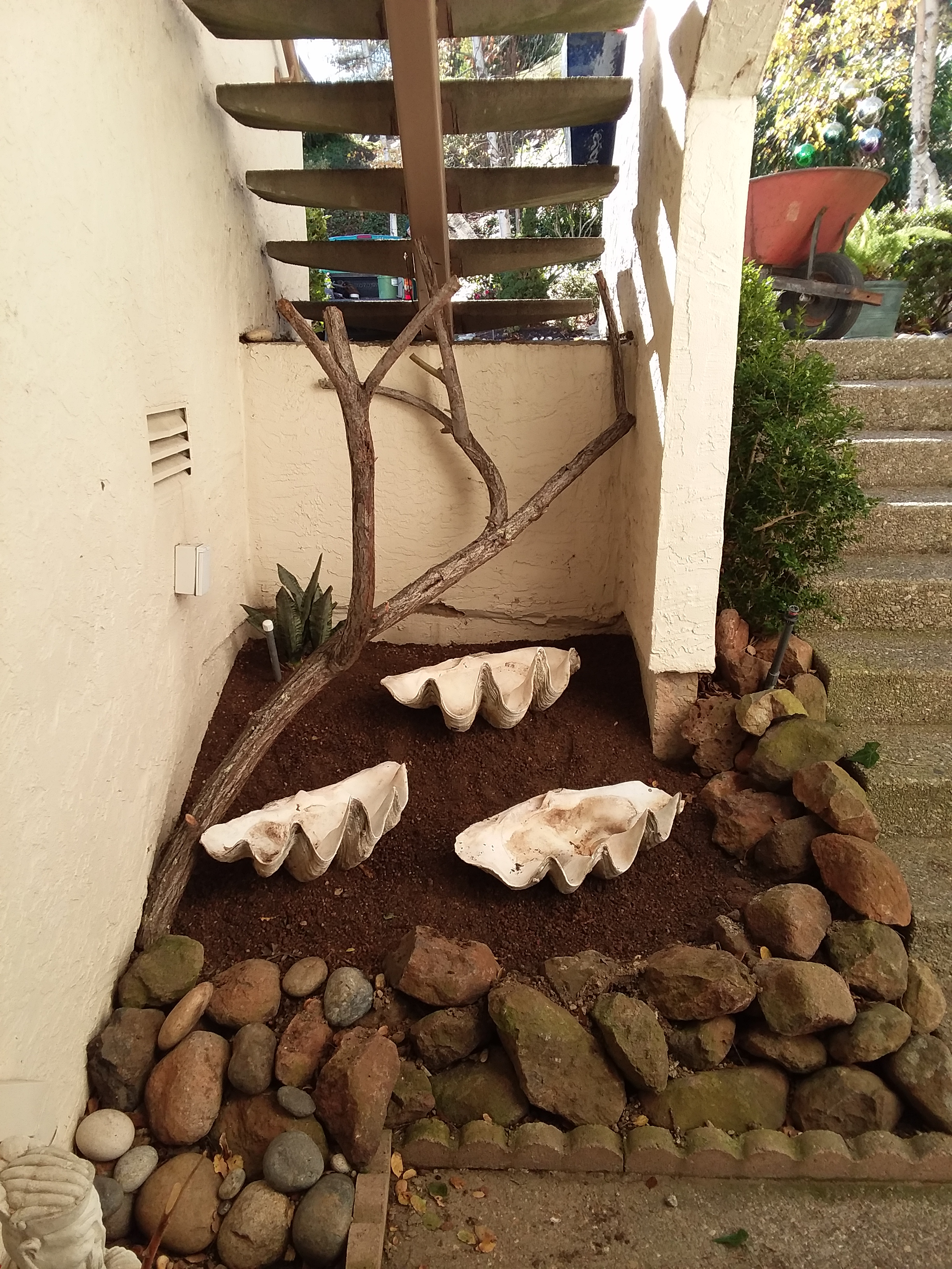 Giant Clam Shells Under Stairwell with 1st Plant Installed & Decorative Branch 12-29-18.jpg