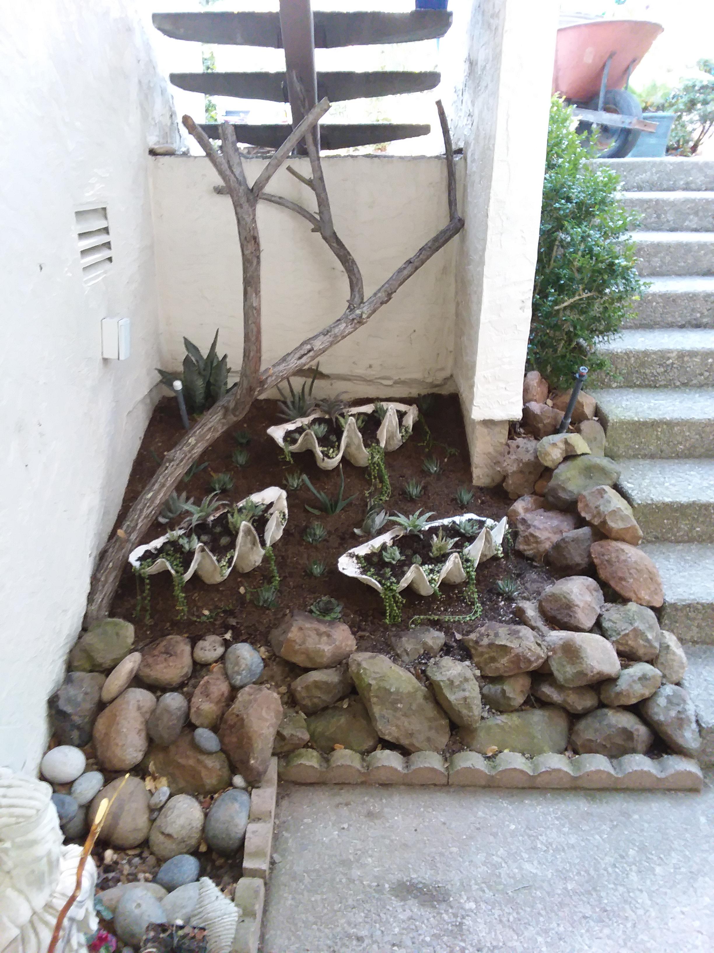 Giant Clam Shells Under Stairwell All Plants Installed - Straight On from Front Door 12-29-18.jpg