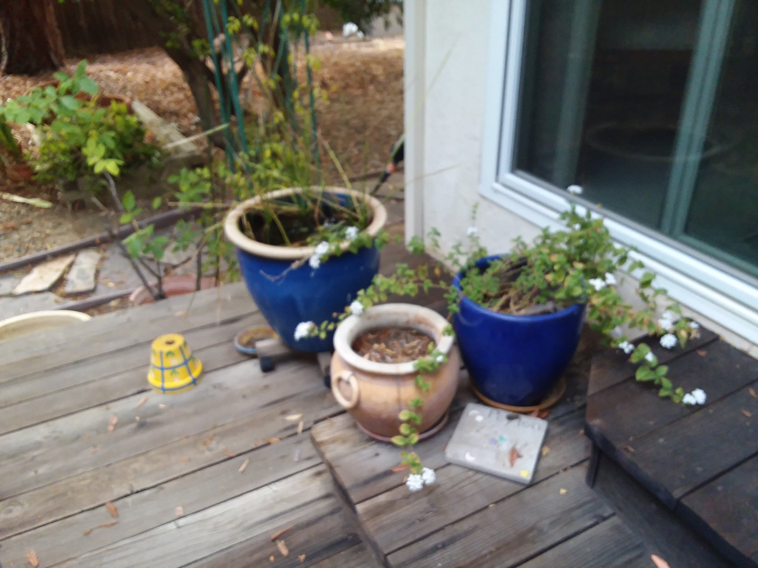 Pots to the Left of M'Lou Bell Deck Steps to Sliding Glass Door Taken Mon., Oct. 1, 2018.jpg