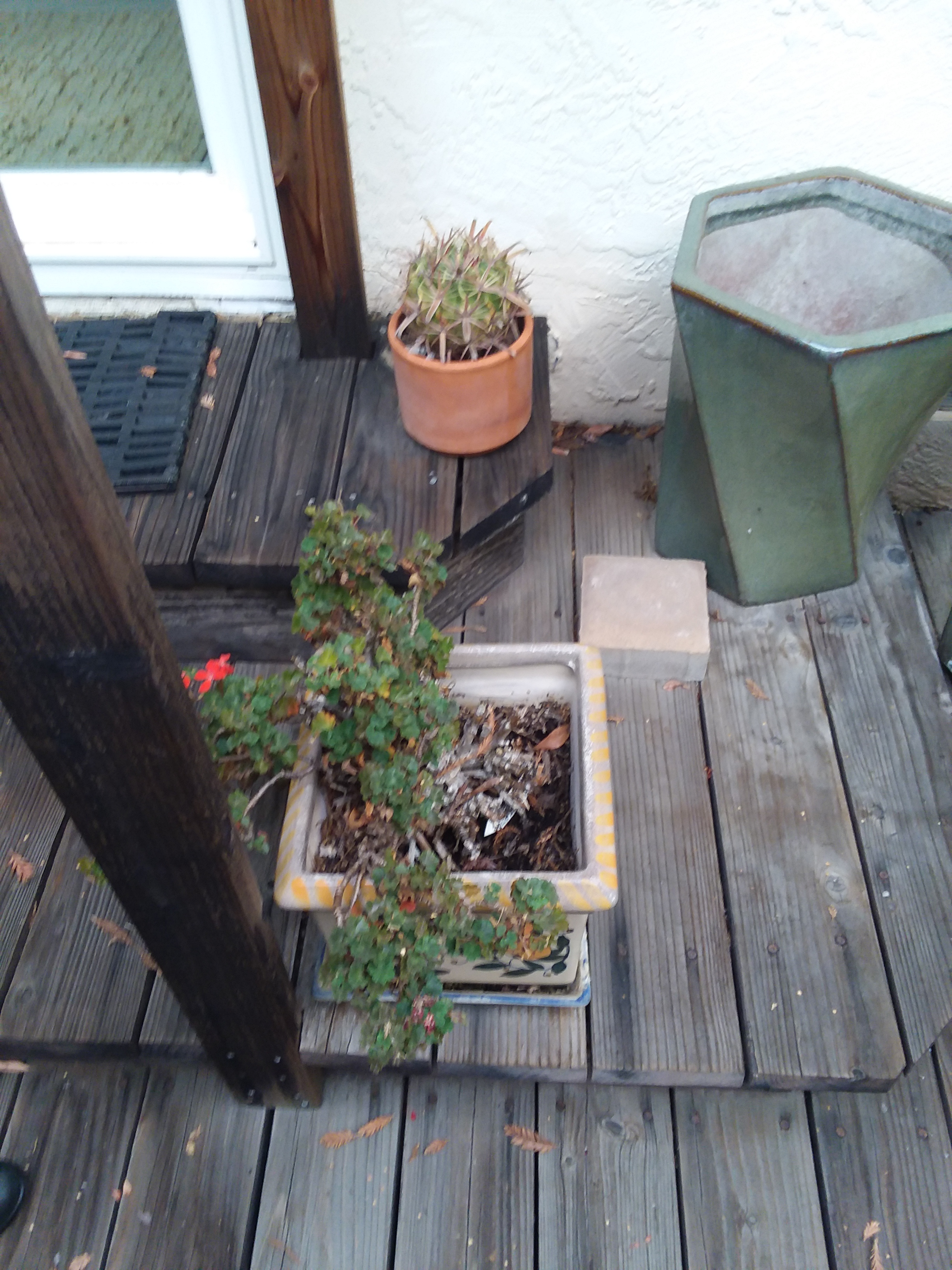 Pots to the Right of M'Lou Bell Deck Steps to Sliding Glass Door Taken Mon., Oct. 1, 2018.jpg