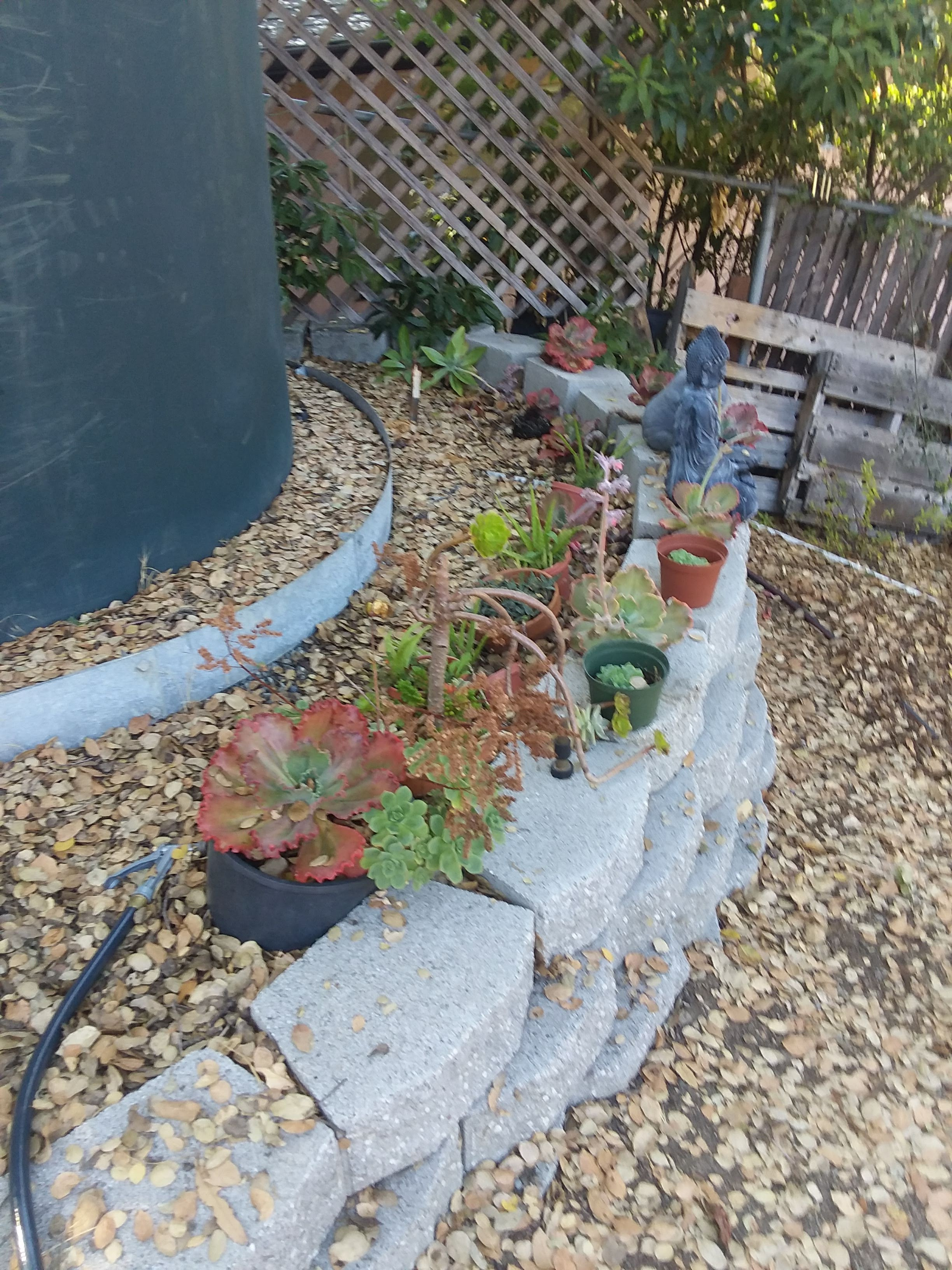 Norma's Succulent retaining wall on Wed., August 29, 2018.jpg