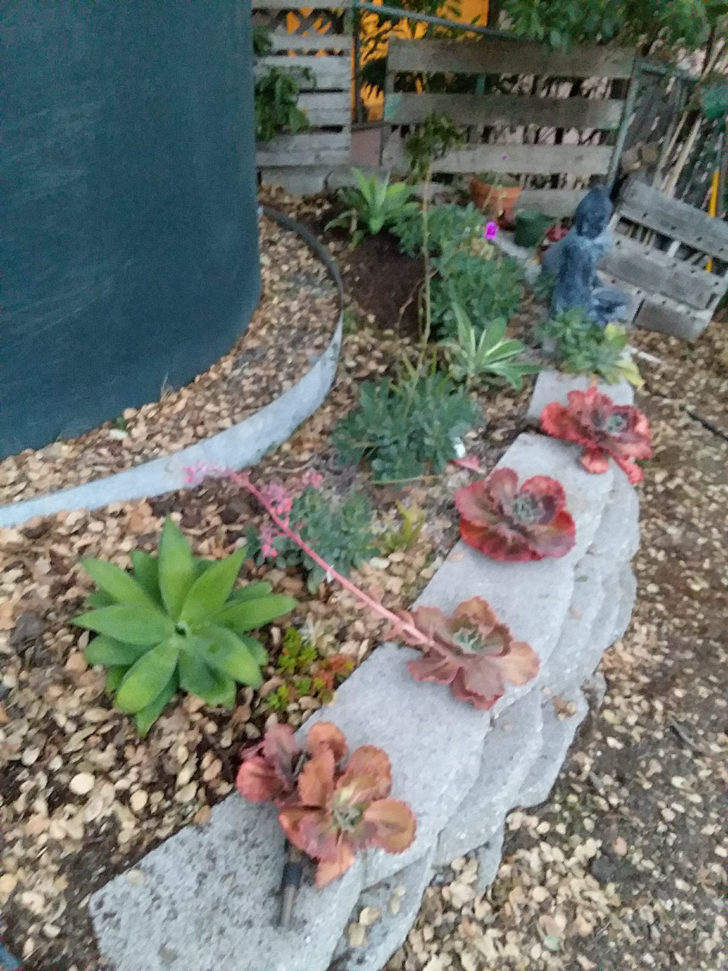 Norma's succulent wall on Wed., Nov. 7, 2018-2.jpg