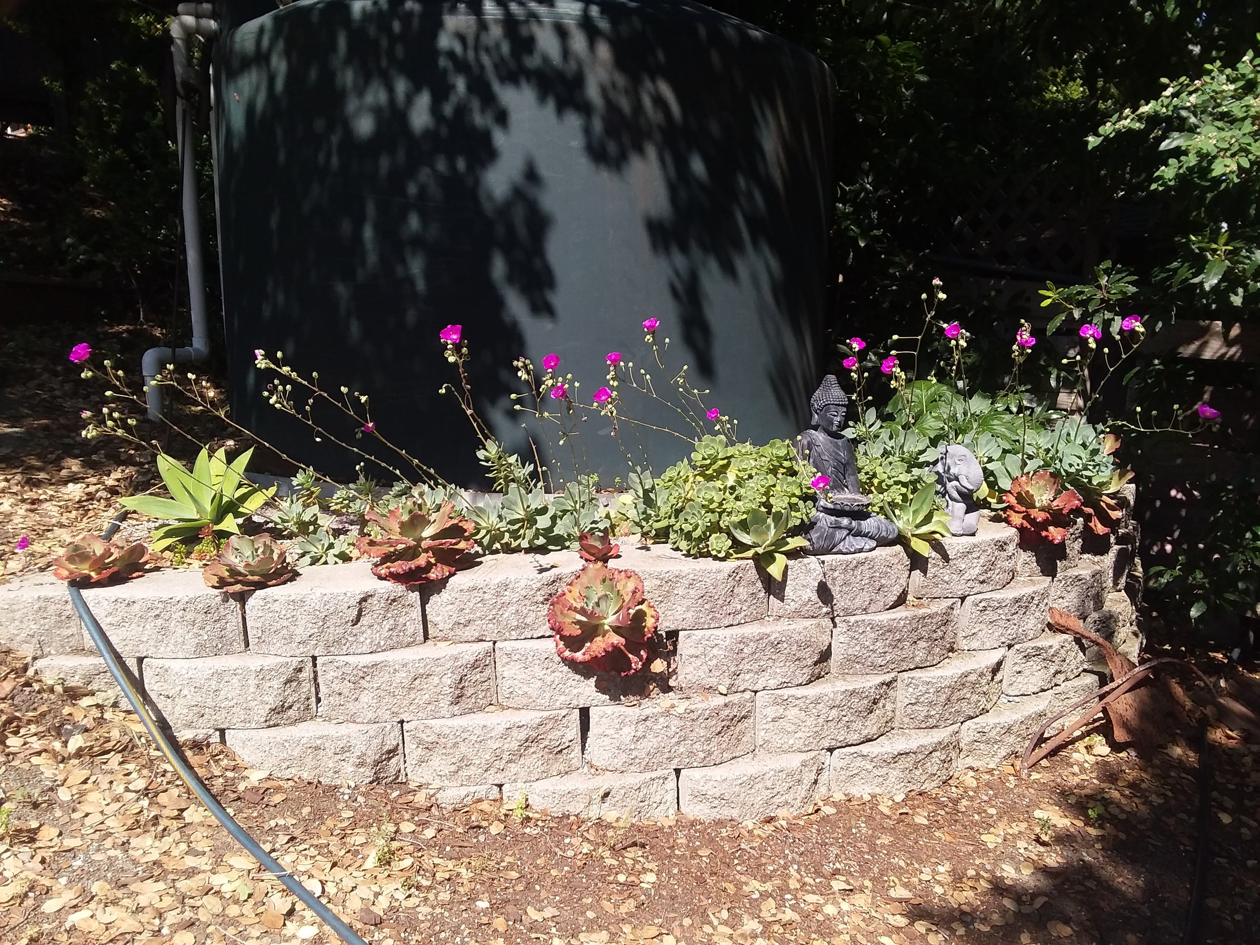 NORMA'S succulent wall on Tues., June 11, 2019-2.jpg