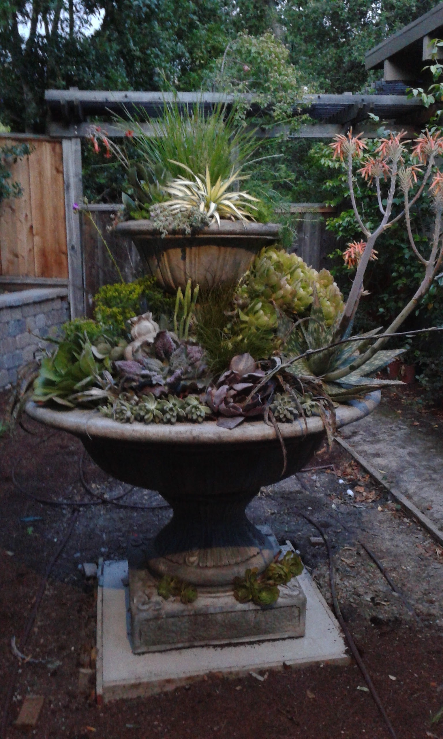 Amason Succulent Fountain Sat., May 14, 2016.jpg