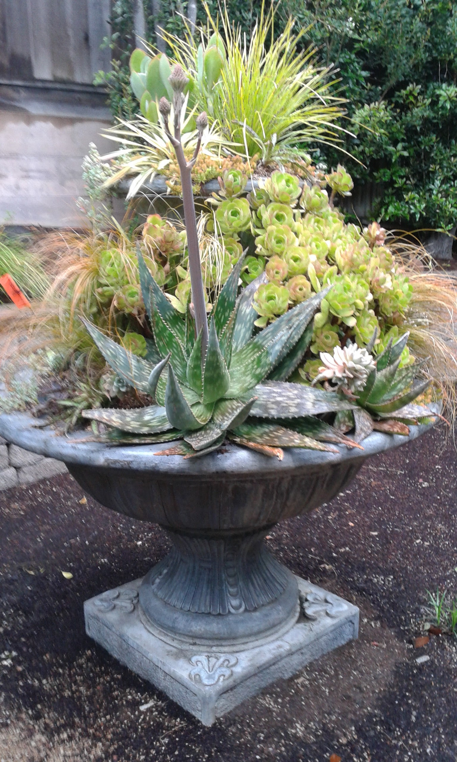 Amason's Succulent Fountain on Sun., April 16, 2017-2.jpg