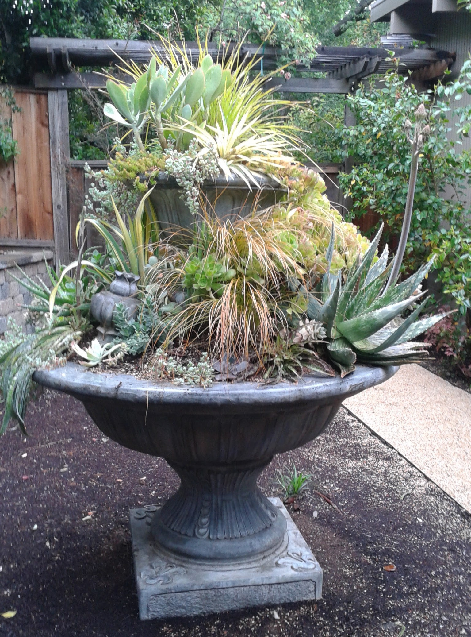 Amason's Succulent Fountain on Sun., April 16, 2017-1.jpg