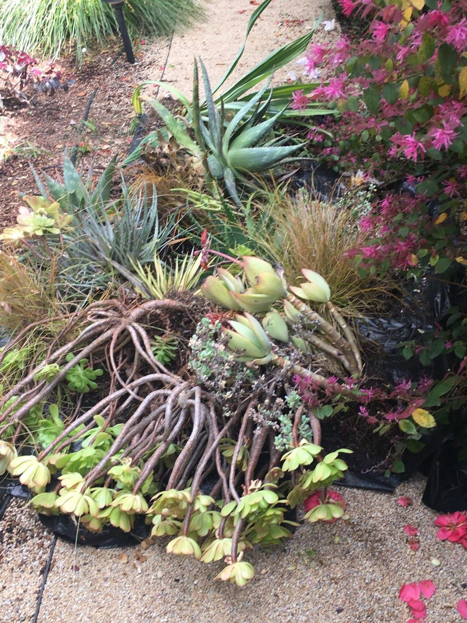 Amason's succulent fountain salvage pile on Sat., April 6, 2019.jpg